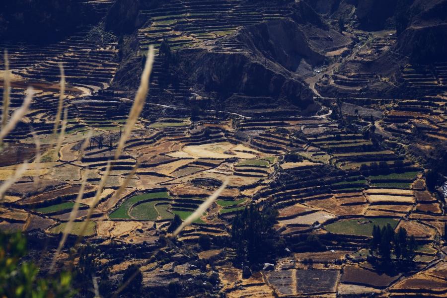 Cayon de la Colca - Pérou